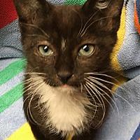 Adopt A Pet :: Cinder - Monroe, GA