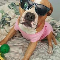 Adopt A Pet :: Norbit - Bedminster, NJ