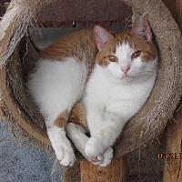 Adopt A Pet :: Pumpkin - Conway, SC