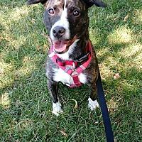 Adopt A Pet :: KO - Villa Park, IL