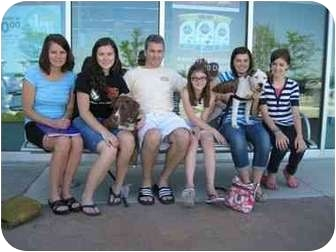 Boxer/American Pit Bull Terrier Mix Puppy for adoption in Detroit, Michigan - Betty-Adopted