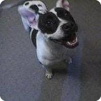 Adopt A Pet :: Marvel - Alliance, NE
