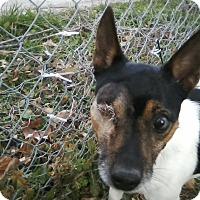 Adopt A Pet :: Buddy - Council Bluffs, IA