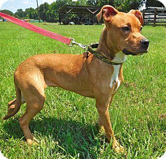Boxer Mix Dog for adoption in St. Francisville, Louisiana - Jenny Lynn