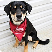 Shepherd (Unknown Type)/Shiba Inu Mix Dog for adoption in Washington, D.C. - Tibby