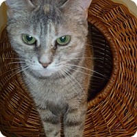 Adopt A Pet :: Chi - Hamburg, NY