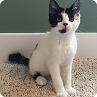 Adopt A Pet :: Soledad - Byron Center, MI
