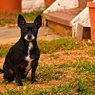 Adopt A Pet :: Cala (pronounced KAY-lah)