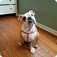Adopt A Pet :: Emma Stone - Park Ridge, IL