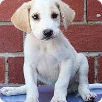 Adopt A Pet :: Duck - Waldorf, MD