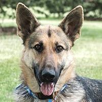 Adopt A Pet :: Zoe - Denver, CO
