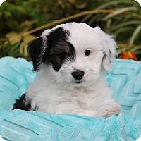 Adopt A Pet :: AGATE - Newport Beach, CA