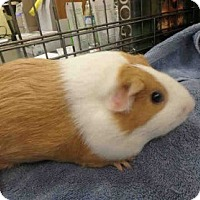 Adopt A Pet :: *Urgent* Sadie - Fullerton, CA