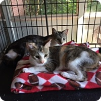 Adopt A Pet :: Charlotte - Troy, OH