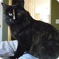 Adopt A Pet :: Cuddles - Colorado Springs, CO