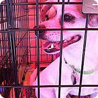 Adopt A Pet :: Jack - North Hollywood, CA