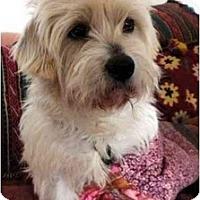 Adopt A Pet :: LAPO - Miami Beach, FL