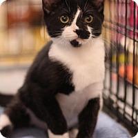 Adopt A Pet :: Beast Boy - Sacramento, CA