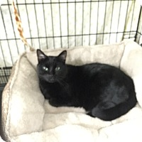 Adopt A Pet :: Delilah - Speonk, NY