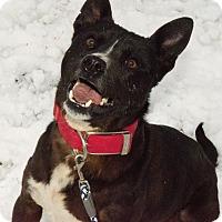 Adopt A Pet :: Jaxson - Westfield, IN