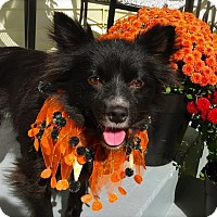 Adopt A Pet :: Deakle - Pawling, NY