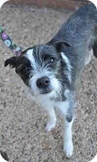 Terrier (Unknown Type, Small) Mix Dog for adoption in Atlanta, Georgia - Cookie