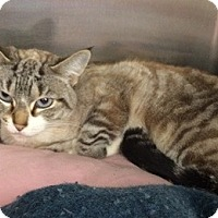 Adopt A Pet :: Sweetie - North Highlands, CA