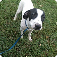 Beagle Mix Dog for adoption in Russellville, Kentucky - Oakley