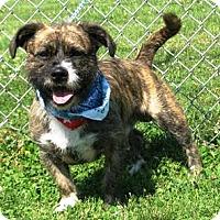 Adopt A Pet :: Gizmo - Oswego, IL