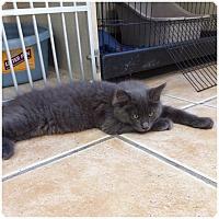Adopt A Pet :: SAGE - Hamilton, NJ