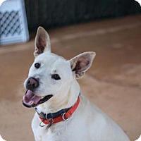 Adopt A Pet :: Superman - Alpharetta, GA