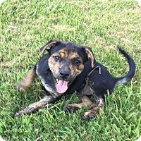 Adopt A Pet :: Marco - Boston, MA