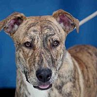 Adopt A Pet :: FONDA - Downey, CA