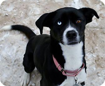 Border Collie Mix Dog for adoption in Bellevue, Nebraska - Leslie