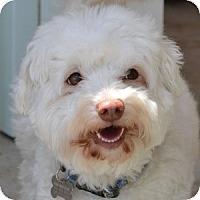 Adopt A Pet :: Bentley - La Costa, CA