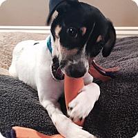 Adopt A Pet :: Nala - Marietta, GA