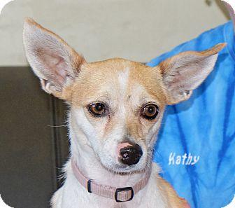 Chihuahua Mix Dog for adoption in Spokane, Washington - Bambi