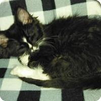 Adopt A Pet :: Bean - McHenry, IL