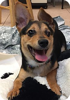 Terrier (Unknown Type, Medium) Mix Puppy for adoption in Boca Raton, Florida - Squeeky