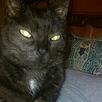 Adopt A Pet :: Midnight - Acushnet, MA