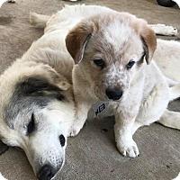Adopt A Pet :: Einstein - Kyle, TX