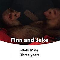 Adopt A Pet :: Finn and Jake - Walker, LA