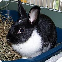Adopt A Pet :: Rose LaLonde - Alexandria, VA