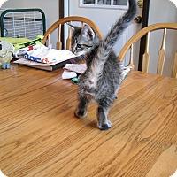 "Adopt A Pet :: Alex ""The Play Team Leader"" - Sedalia, MO"