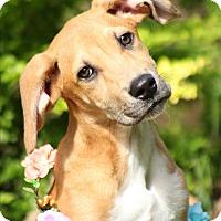 Adopt A Pet :: Fiona - North Vancouver, BC