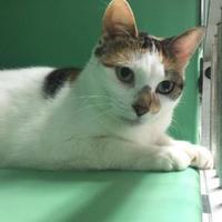 Adopt A Pet :: Kalli - Belleville, ON