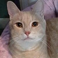 Adopt A Pet :: Oliver Sam - Cincinnati, OH