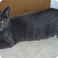 Adopt A Pet :: Mist - Richmond, VA