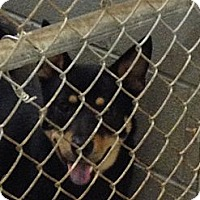 Adopt A Pet :: Butch - Schererville, IN