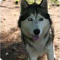Adopt A Pet :: Meeko - Belleville, MI